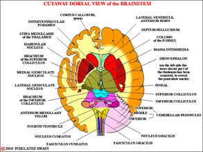 Pixelated Brain: Neuroanatomy for Medical Students: Module 2 - The ...